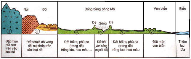 Hình 36.1. Lát cát địa hình - thổ nhưỡng theo vĩ tuyến 20oB, lớp 8