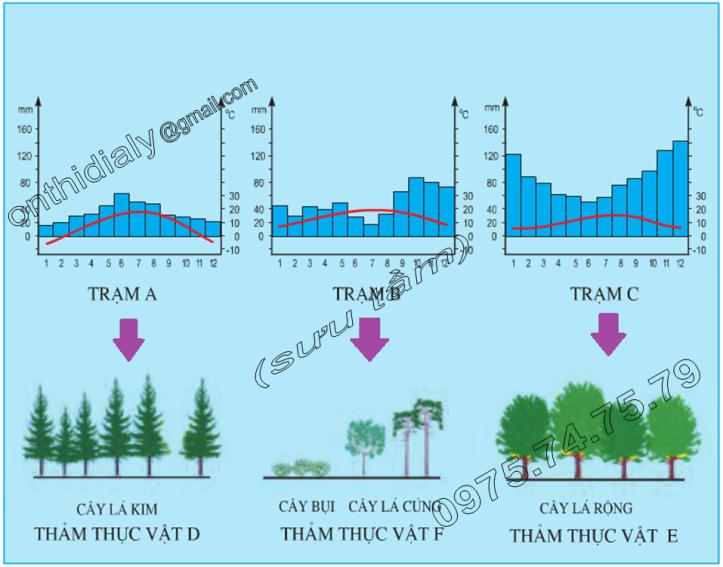 Hinh 53.1. Biểu đồ nhiệt độ, lượng mưa và sơ đồ thảm thực vật ở một số vùng của châu Âu