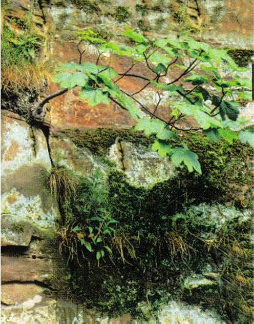 Hinh 9.3. Rễ cây làm cho các lớp đá rạn nứt