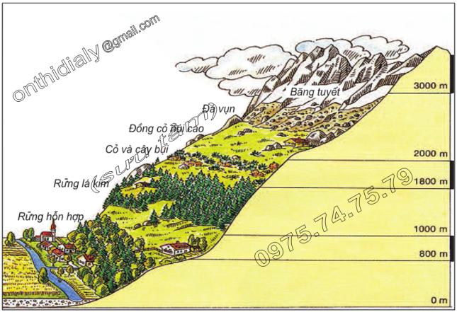 Hinh 18. Các vành đai thực vật theo độ cao ở núi An-pơ (châu Âu)