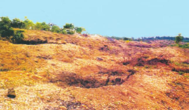 Hinh 20.2. Bề mặt đất bị rửa trôi, xói mòn sau khi rừng bị tàn phá