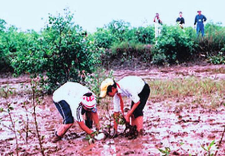 Hinh 28.6. Thanh thiếu niên tích cực tham gia trồng rừng ngập mặn (Việt Nam)