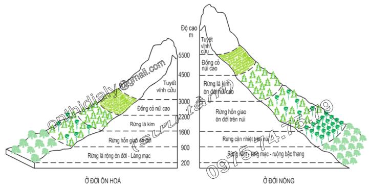 Hinh 23.3. Phân tầng thực vật theo độ cao ở đới ôn hòa và đới nóng
