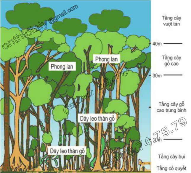 Hinh 5.4. Lát cắt rừng rậm xanh quanh năm