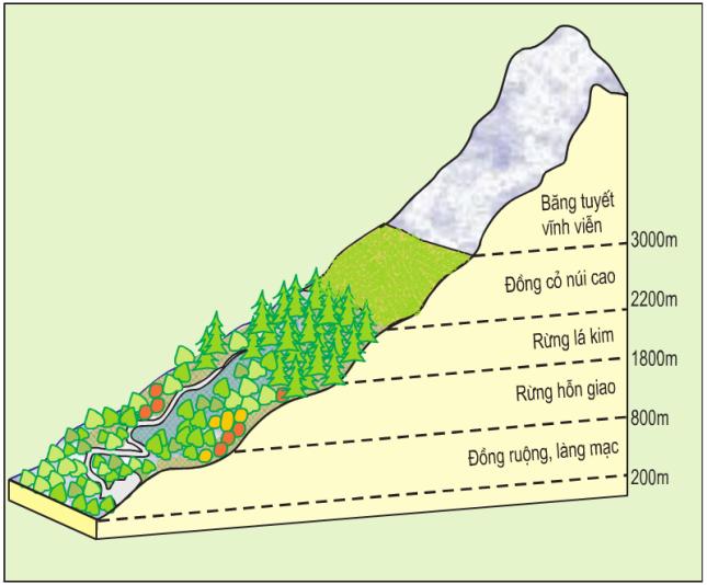 Hinh 52.4. Sơ đồ phân bố thực vật theo độ cao ở dãy An-pơ