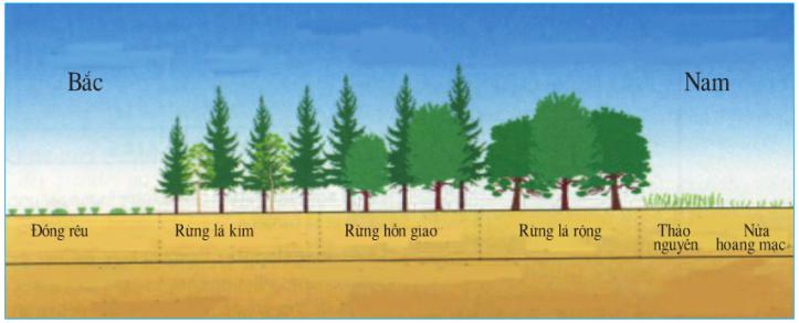 Hinh 59.2. Sơ đồ thảm thực vật khu vực Đông Âu từ bắc xuống nam