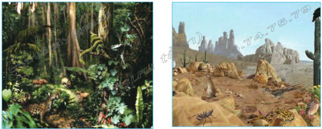 Hinh 67. Rừng mưa nhiệt đới và Hình 68. Hoang mạc nhiệt đới
