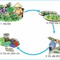 Bài 4. Trung du Bắc Bộ (Địa lý 4)