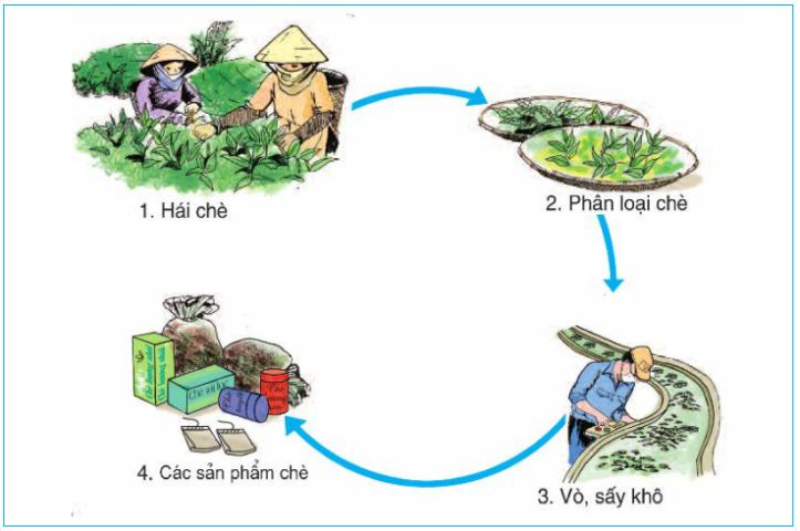 Hinh 3. Quy trình chế biến chè