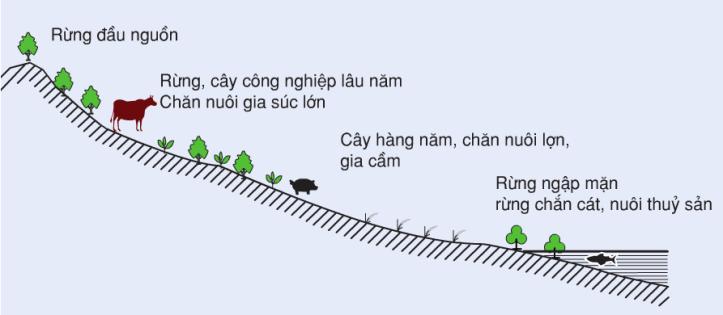 Hinh 35.1. Lát cắt từ Tây sang Đông thể hiện cơ cấu nông-lâm-ngư nghiệp của vùng