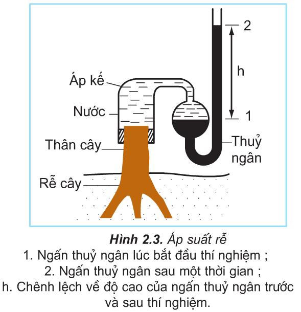 Hình 2.3 (Sinh 11)