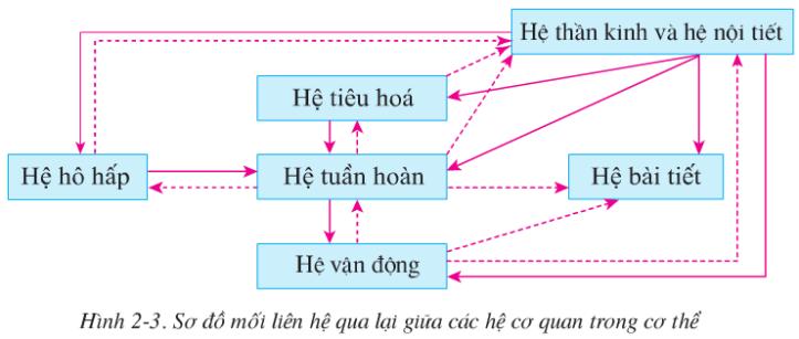 Hình 2.3 (Sinh 8)